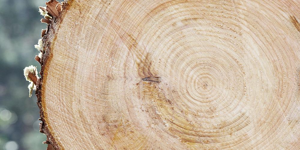 地域木材利用コンサルタントのイメージ